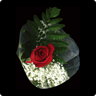 Classic Single Rose Wrapped