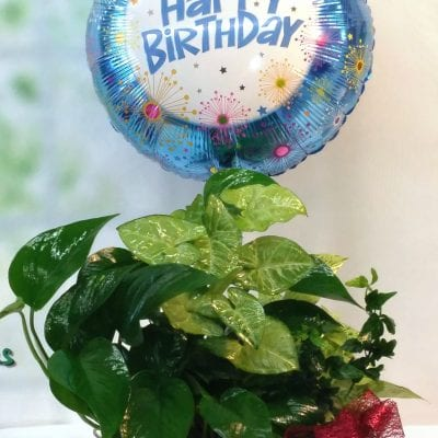 Birthday Dish Garden with Balloon
