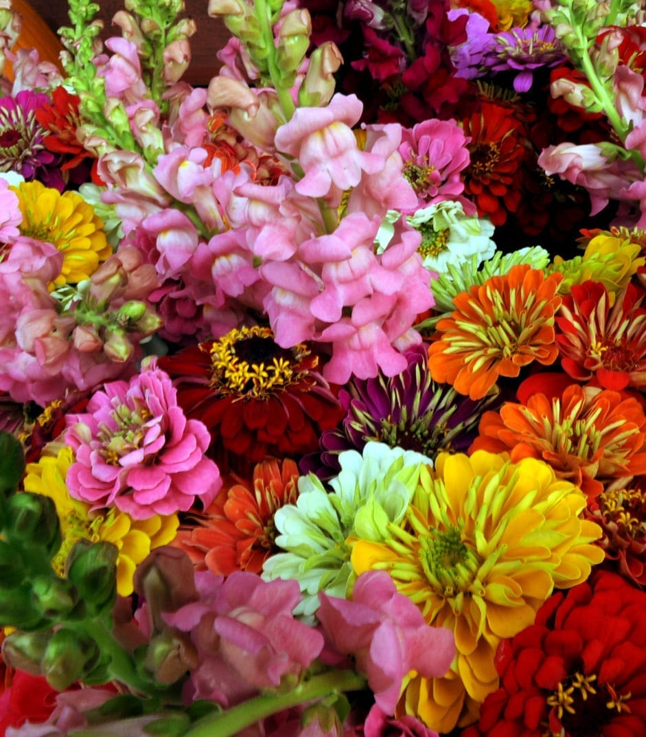 Local flower shop in tempe az fiesta flowers plants gifts florists choice bouquet in a vase choose pastels or brights v 1326 izmirmasajfo