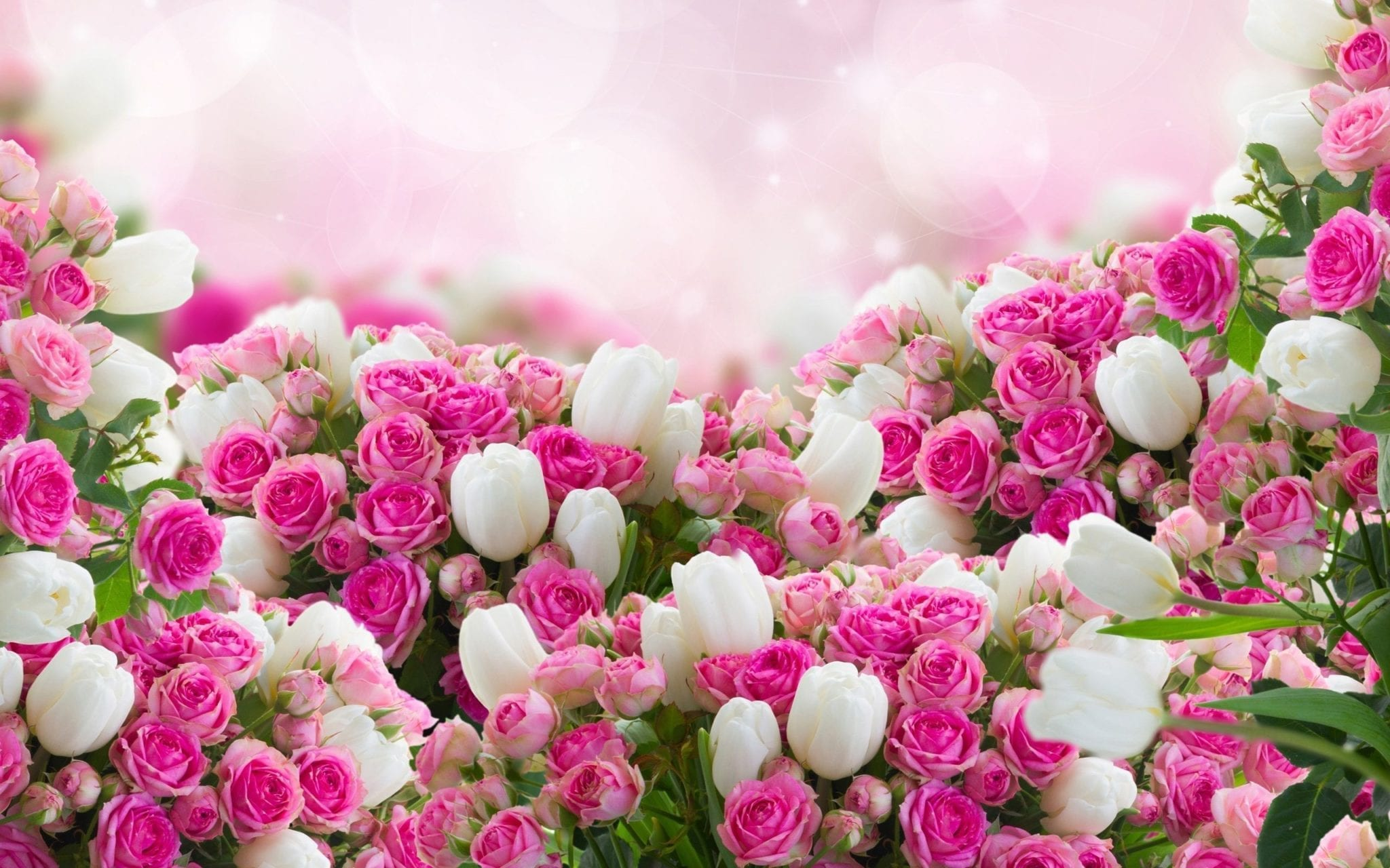 Red And White Flowers Flower Hd Wallpaper 2560x1600 Fiesta Flowers